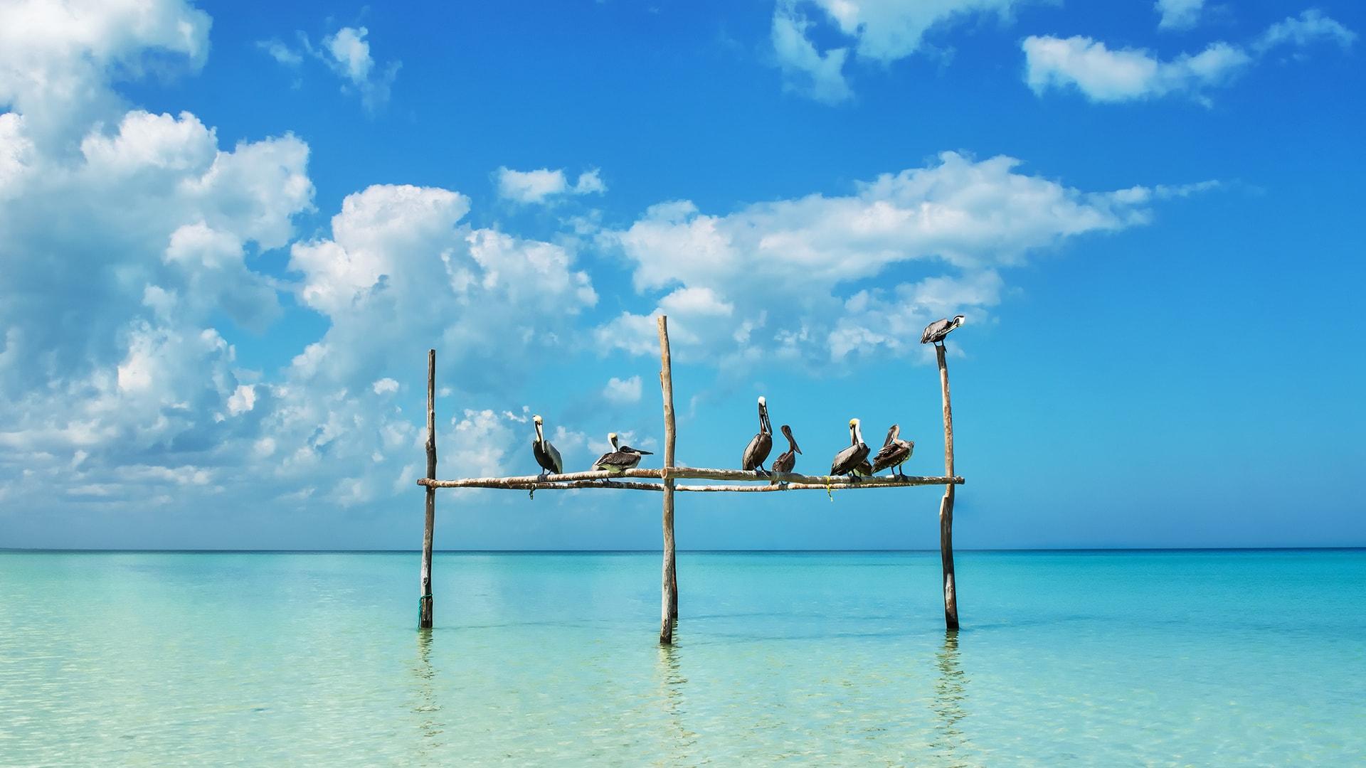 Viaje a las Playas de México