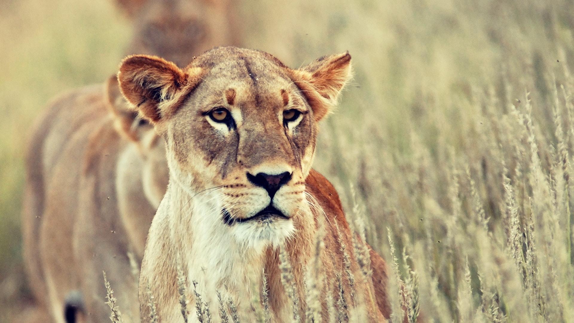 Viajes y Safaris a Sudáfrica a medida y en privado