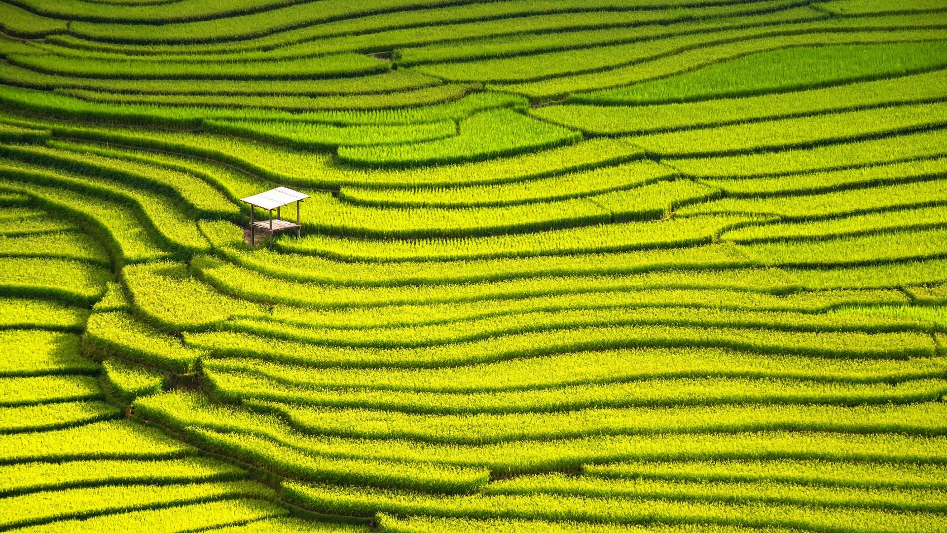Los bancales de Vietnam