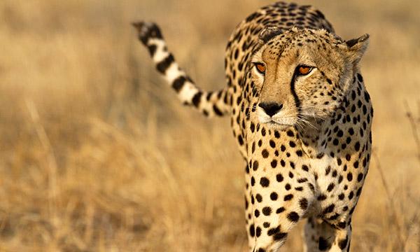 Viaje a Botswana a medida