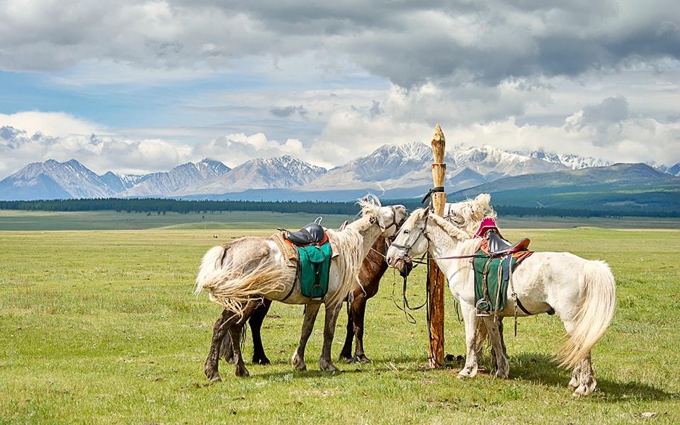Recorrer Mongolia a caballo