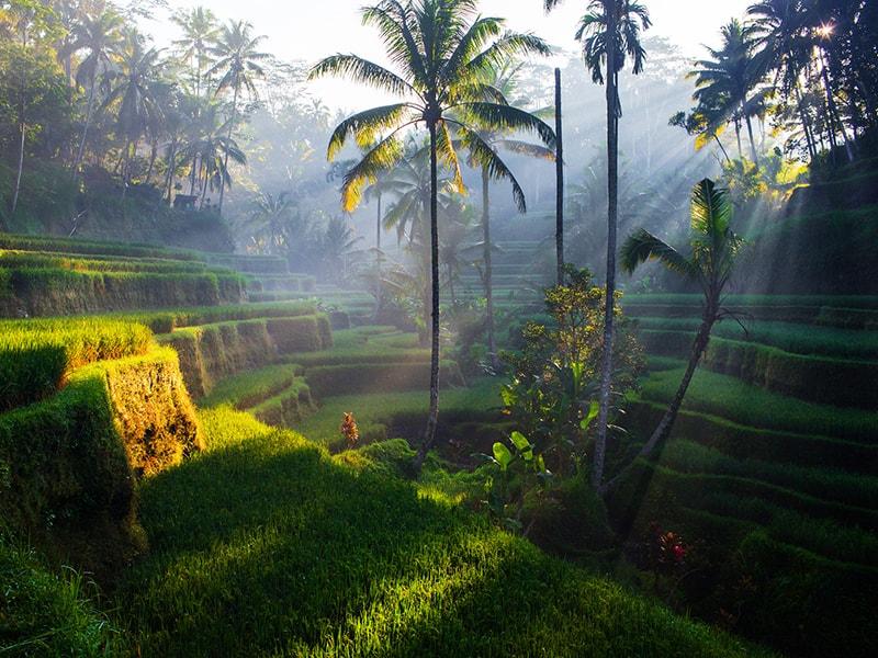 Indonesia. Adentrarse en el corazón de Bali