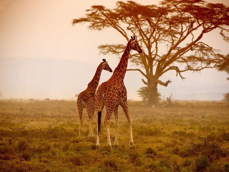 Kenia. Recorrido por la Reserva de Samburu