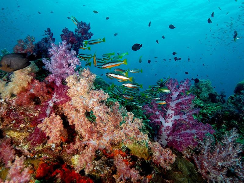 Malasia. Bucear entre corales y arrecifes