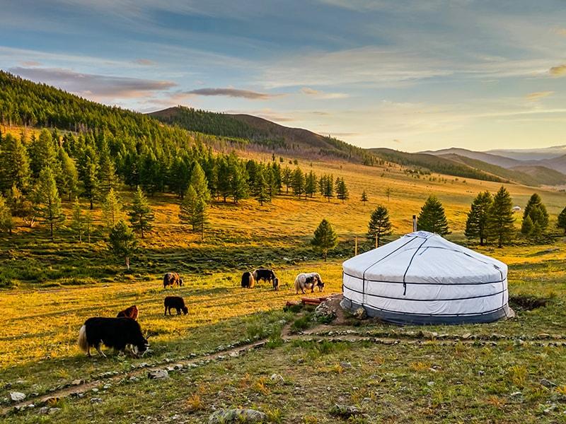 Mongolia. Lacultura nómada