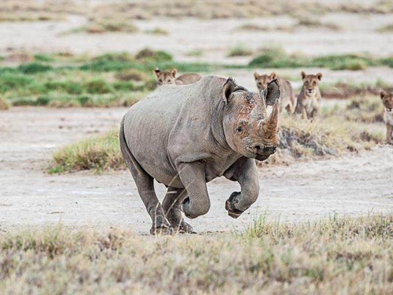 Namibia. Seguir la pista de los rinocerontes en rafting