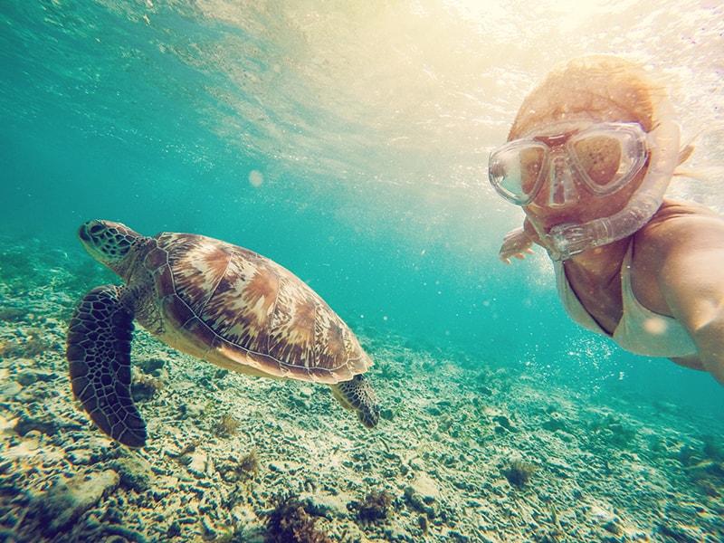 Playas de Asia. Snorkel entre tortugas en Maldivas