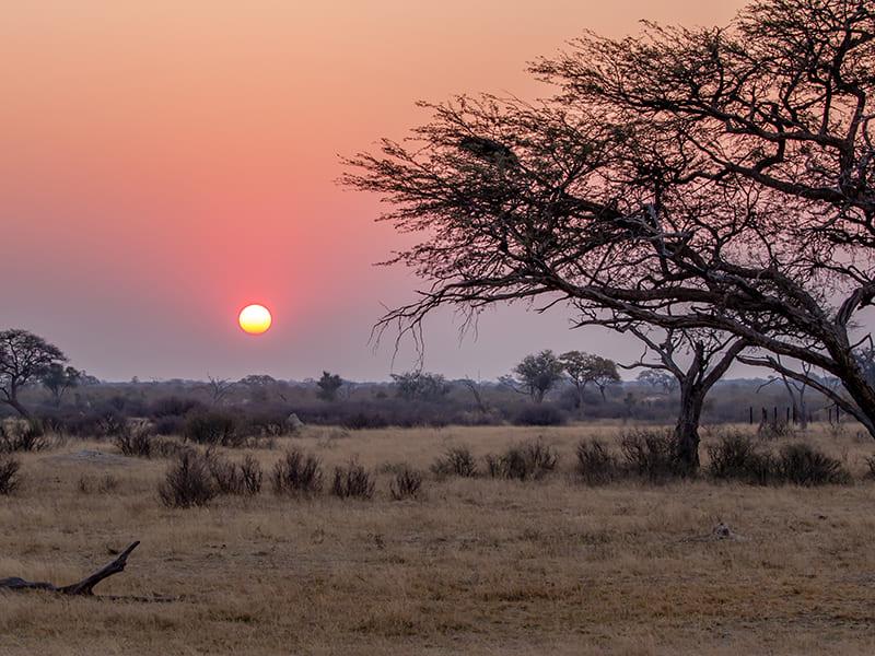 Zambia. Safari nocturno