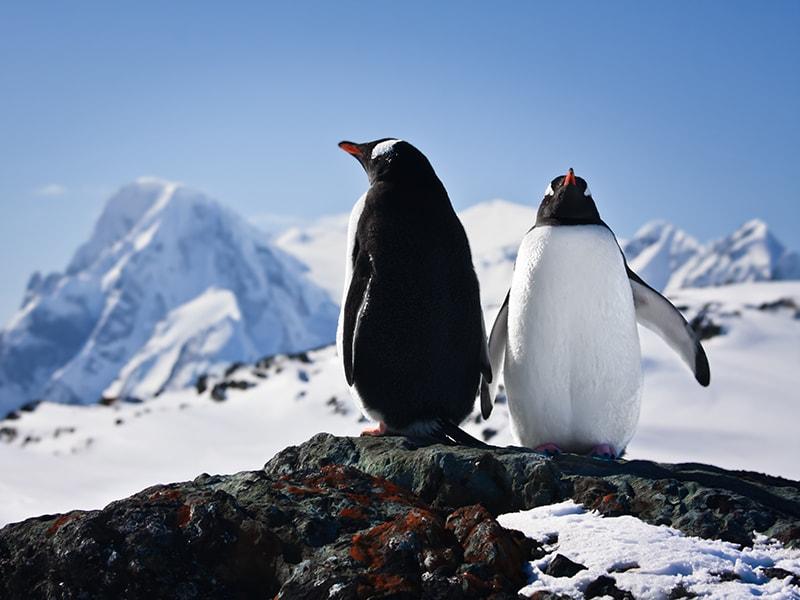 Antártida. Ver las pobladas colonias de pingüinos
