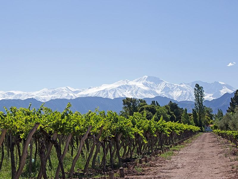 Argentina. Recorrer los viñedos de Mendoza
