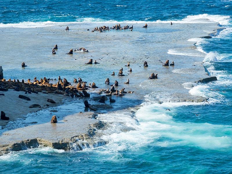 Argentina. Snorkel en Península Valdés