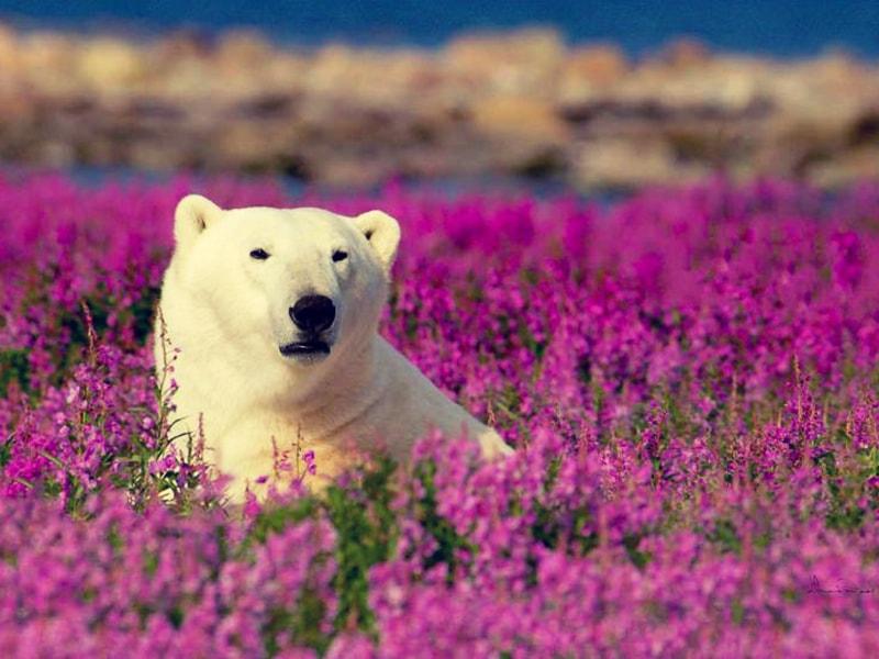 Canadá. Adentrarse en las zonas menos exploradas para observar como caza el oso grizzly