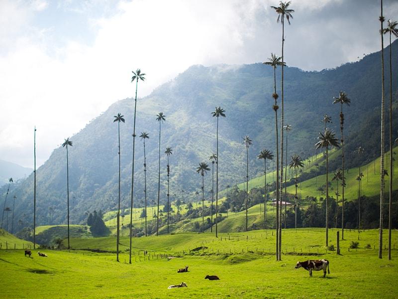 Colombia. Vuelo en globo o paseos a caballo por el Eje Cafetero