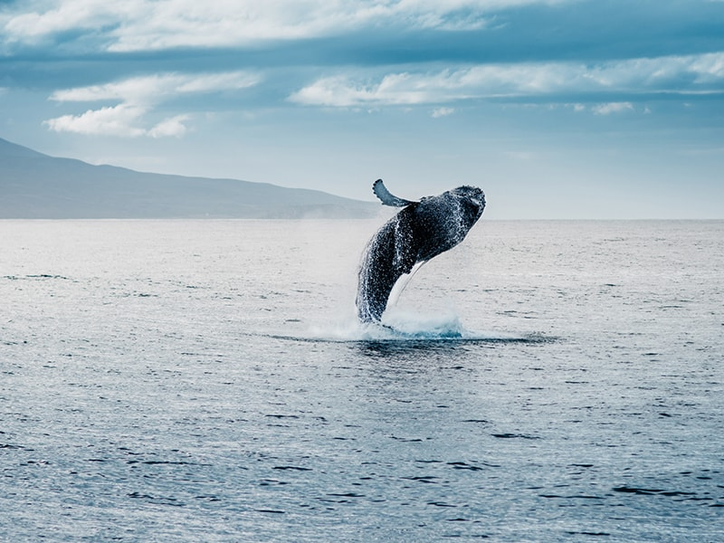 Islandia. Contemplar ballenas