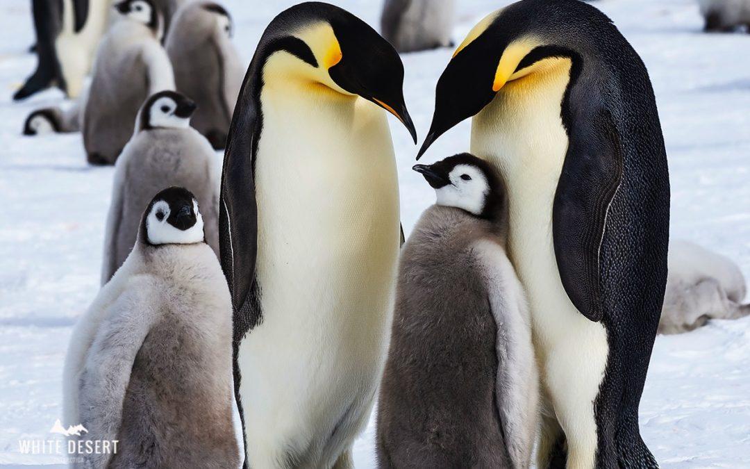 White Desert: la exclusiva travesía antártica